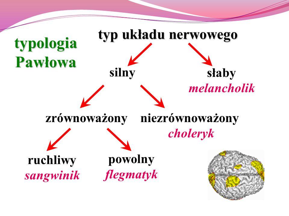 typ układu nerwowego zrównoważony słaby melancholik silny niezrównoważony choleryk ruchliwy sangwinik powolny flegmatyk typologiaPawłowa