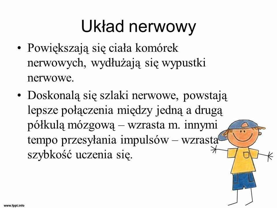 Układ nerwowy Powiększają się ciała komórek nerwowych, wydłużają się wypustki nerwowe.
