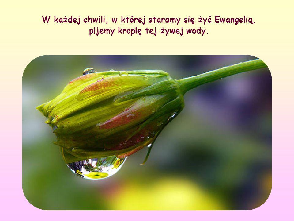 Wszyscy więc starajmy się czerpać z Jego słów i pozwólmy się nasycić Jego przesłaniem. Jak? Ewangelizując na nowo nasze życie, porównując je ze słowam