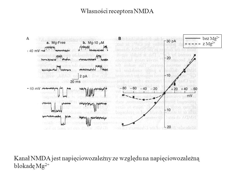 Własności receptora NMDA bez Mg 2+ z Mg 2+ - Kanał NMDA jest napięciowozależny ze względu na napięciowozależną blokadę Mg 2+