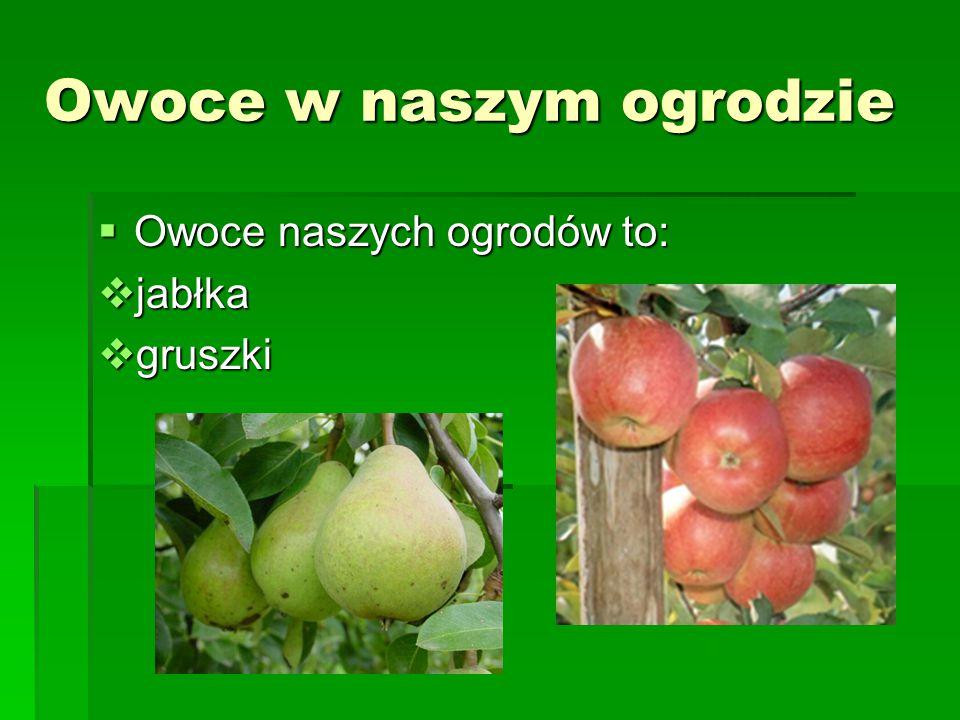 Owoce w naszym ogrodzie  Owoce naszych ogrodów to:  jabłka  gruszki
