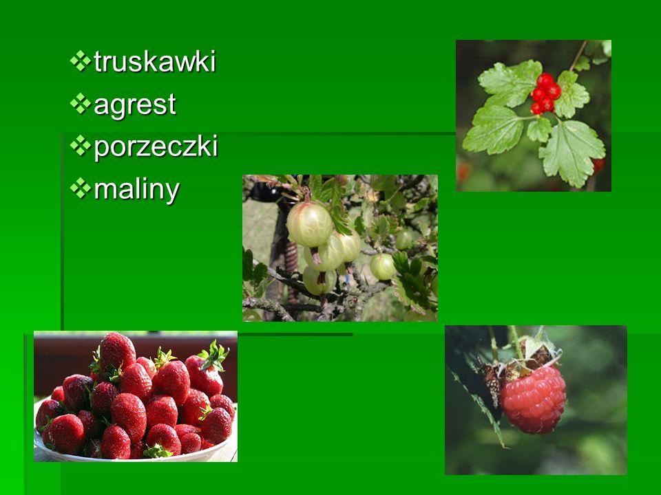  truskawki  agrest  porzeczki  maliny