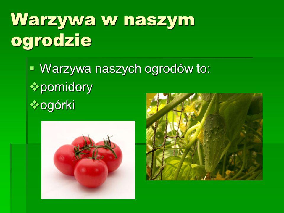 Warzywa w naszym ogrodzie  Warzywa naszych ogrodów to:  pomidory  ogórki