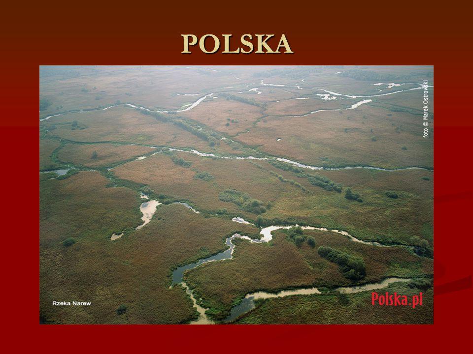 PLEMIONA POLSKIE POLANIE POLANIE WIŚLANIE WIŚLANIE MAZOWSZANIE MAZOWSZANIE POMORZANIE POMORZANIE LĘDZIANIE LĘDZIANIE ŚLĘŻANIE ŚLĘŻANIE