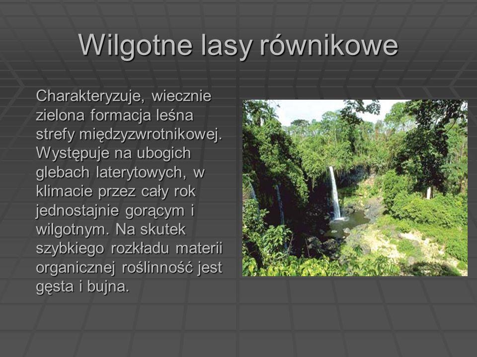Wilgotne lasy równikowe Charakteryzuje, wiecznie zielona formacja leśna strefy międzyzwrotnikowej. Występuje na ubogich glebach laterytowych, w klimac