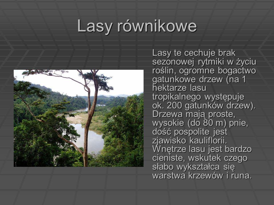 Lasy równikowe Lasy te cechuje brak sezonowej rytmiki w życiu roślin, ogromne bogactwo gatunkowe drzew (na 1 hektarze lasu tropikalnego występuje ok.