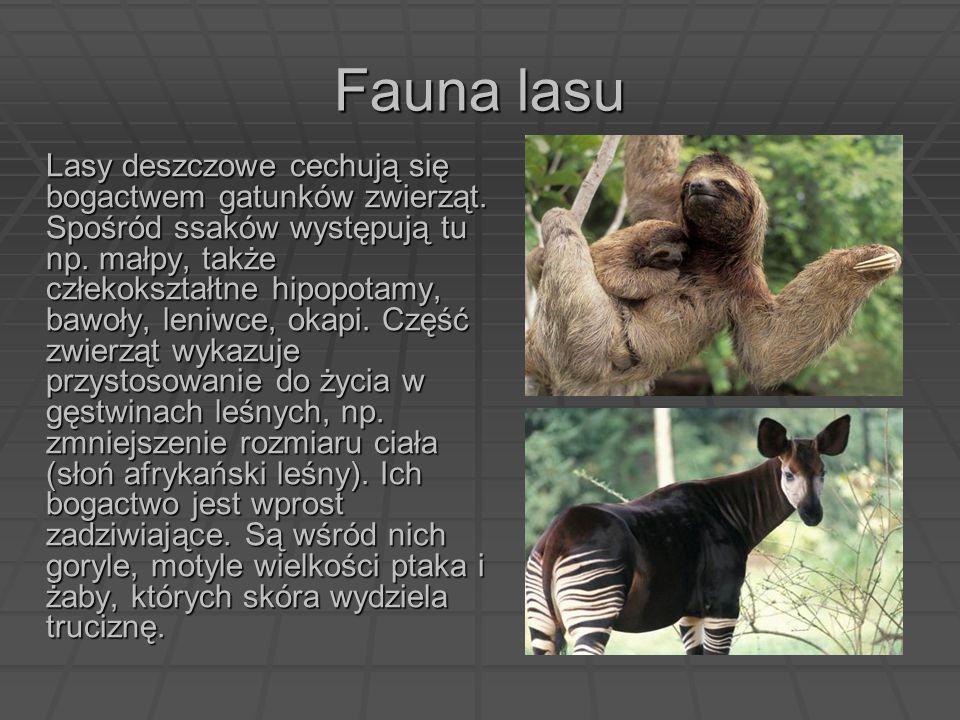 Fauna lasu Lasy deszczowe cechują się bogactwem gatunków zwierząt. Spośród ssaków występują tu np. małpy, także człekokształtne hipopotamy, bawoły, le
