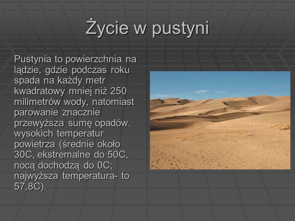 Życie w pustyni Pustynia to powierzchnia na lądzie, gdzie podczas roku spada na każdy metr kwadratowy mniej niż 250 milimetrów wody, natomiast parowan