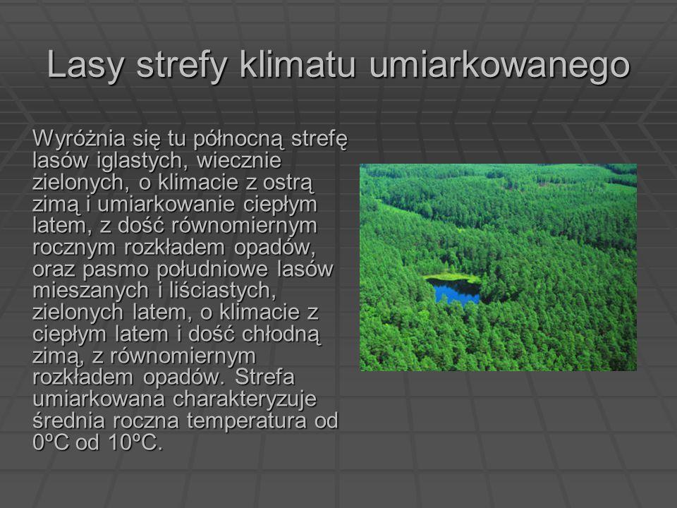 Lasy strefy klimatu umiarkowanego Wyróżnia się tu północną strefę lasów iglastych, wiecznie zielonych, o klimacie z ostrą zimą i umiarkowanie ciepłym