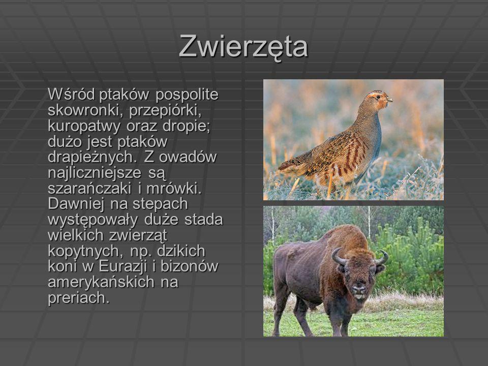 Zwierzęta Wśród ptaków pospolite skowronki, przepiórki, kuropatwy oraz dropie; dużo jest ptaków drapieżnych. Z owadów najliczniejsze są szarańczaki i