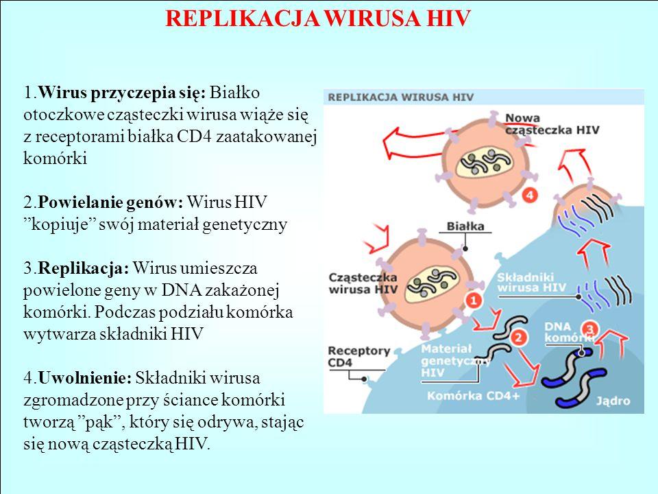 REPLIKACJA WIRUSA HIV 1.Wirus przyczepia się: Białko otoczkowe cząsteczki wirusa wiąże się z receptorami białka CD4 zaatakowanej komórki 2.Powielanie
