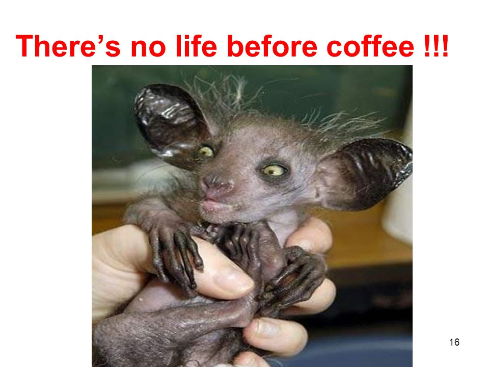 There's no life before coffee !!! 16
