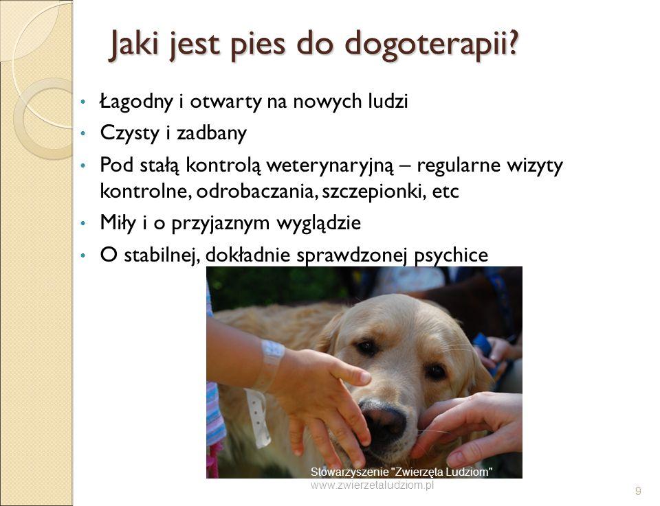 Jaki jest pies do dogoterapii? Łagodny i otwarty na nowych ludzi Czysty i zadbany Pod stałą kontrolą weterynaryjną – regularne wizyty kontrolne, odrob