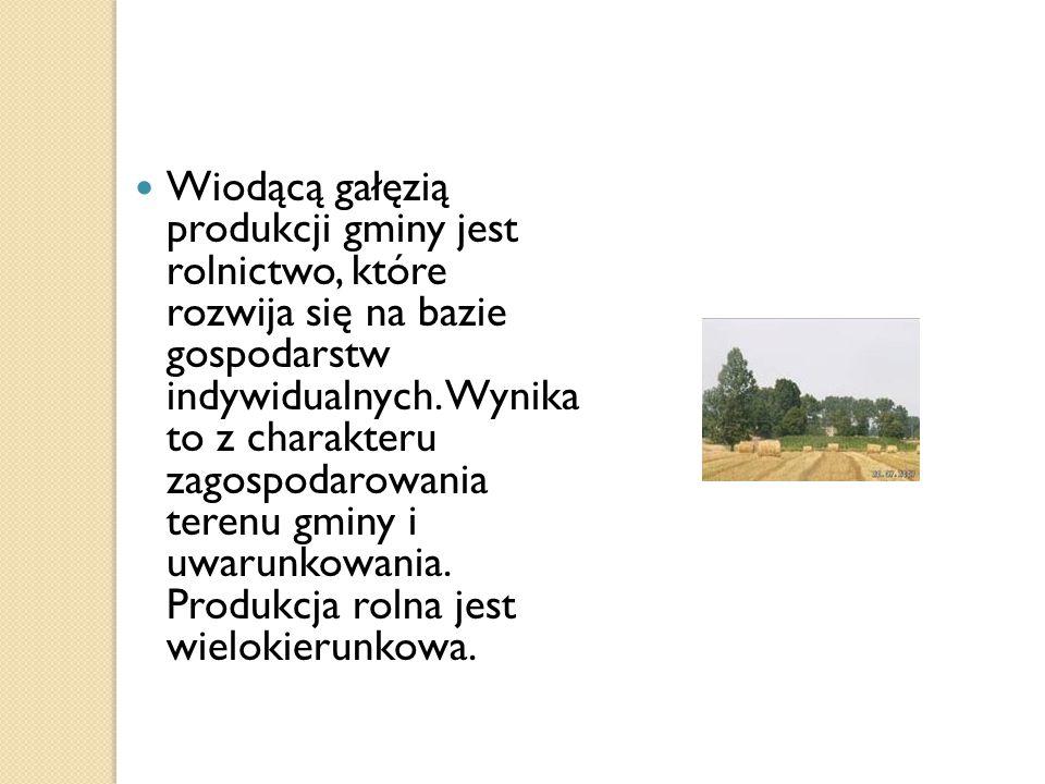 Wiodącą gałęzią produkcji gminy jest rolnictwo, które rozwija się na bazie gospodarstw indywidualnych.