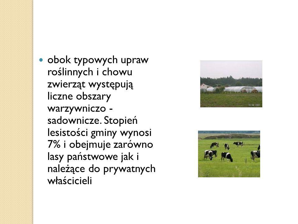 obok typowych upraw roślinnych i chowu zwierząt występują liczne obszary warzywniczo - sadownicze.