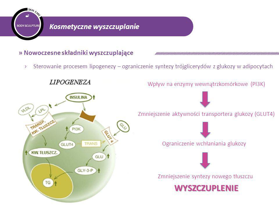 BODY SCULPTURE Kosmetyczne wyszczuplanie » Nowoczesne składniki wyszczuplające Ograniczenie wchłaniania glukozy Wpływ na enzymy wewnątrzkomórkowe (Pl3K) Zmniejszenie syntezy nowego tłuszczu Zmniejszenie aktywności transportera glukozy (GLUT4) WYSZCZUPLENIE › Sterowanie procesem lipogenezy – ograniczenie syntezy trójglicerydów z glukozy w adipocytach