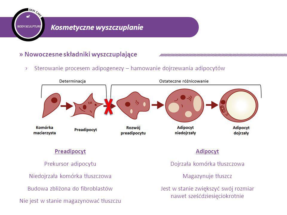 BODY SCULPTURE Kosmetyczne wyszczuplanie » Nowoczesne składniki wyszczuplające › Sterowanie procesem adipogenezy – hamowanie dojrzewania adipocytów Preadipocyt Prekursor adipocytu Niedojrzała komórka tłuszczowa Budowa zbliżona do fibroblastów Nie jest w stanie magazynować tłuszczu Adipocyt Dojrzała komórka tłuszczowa Magazynuje tłuszcz Jest w stanie zwiększyć swój rozmiar nawet sześćdziesięciokrotnie