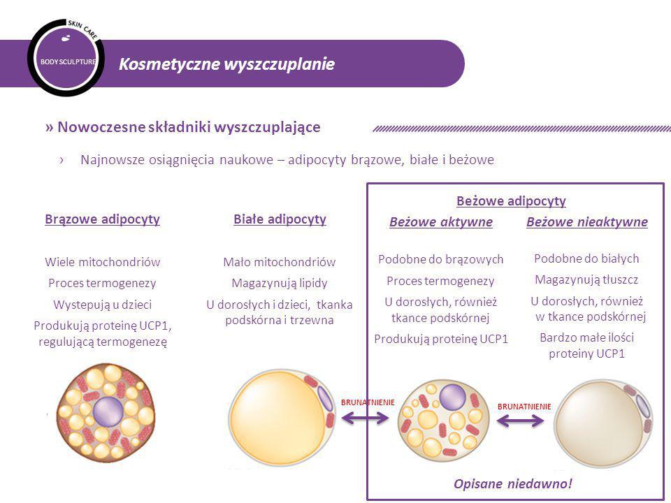 BODY SCULPTURE Kosmetyczne wyszczuplanie » Nowoczesne składniki wyszczuplające › Najnowsze osiągnięcia naukowe – adipocyty brązowe, białe i beżowe Brązowe adipocyty Wiele mitochondriów Proces termogenezy Wystepują u dzieci Produkują proteinę UCP1, regulującą termogenezę BRUNATNIENIE Beżowe aktywne Podobne do brązowych Proces termogenezy U dorosłych, również tkance podskórnej Produkują proteinę UCP1 Beżowe nieaktywne Podobne do białych Magazynują tłuszcz U dorosłych, również w tkance podskórnej Bardzo małe ilości proteiny UCP1 Opisane niedawno.