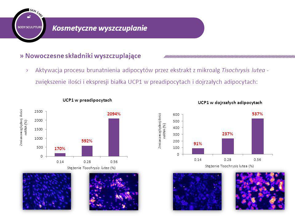 BODY SCULPTURE Kosmetyczne wyszczuplanie » Nowoczesne składniki wyszczuplające › Aktywacja procesu brunatnienia adipocytów przez ekstrakt z mikroalg Tisochrysis lutea - zwiększenie ilości i ekspresji białka UCP1 w preadipocytach i dojrzałych adipocytach: