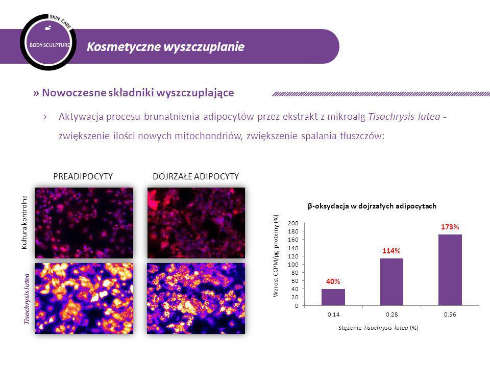 BODY SCULPTURE Kosmetyczne wyszczuplanie » Nowoczesne składniki wyszczuplające › Aktywacja procesu brunatnienia adipocytów przez ekstrakt z mikroalg Tisochrysis lutea - zwiększenie ilości nowych mitochondriów, zwiększenie spalania tłuszczów: PREADIPOCYTYDOJRZAŁE ADIPOCYTY Kultura kontrolna Tisochrysis lutea