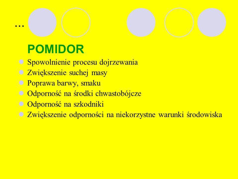 PRZYKŁADY… KUKURYDZA Odporność na owady (szkodniki), Wytwarzanie substancji wykorzystywanych do produkcji leków i szczepionek.