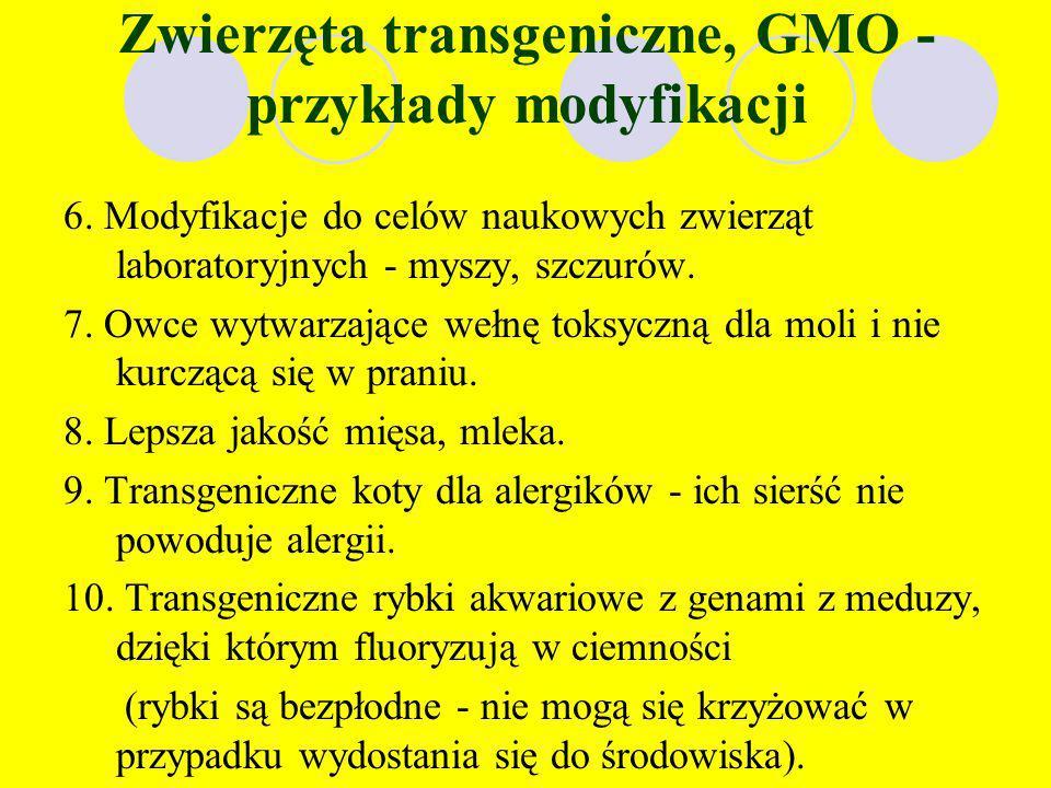 Zwierzęta transgeniczne, GMO - przykłady modyfikacji 2. Uzyskanie szybszego wzrostu zwierząt hodowlanych. 3. Krowy dające więcej mleka, oraz mleko spe
