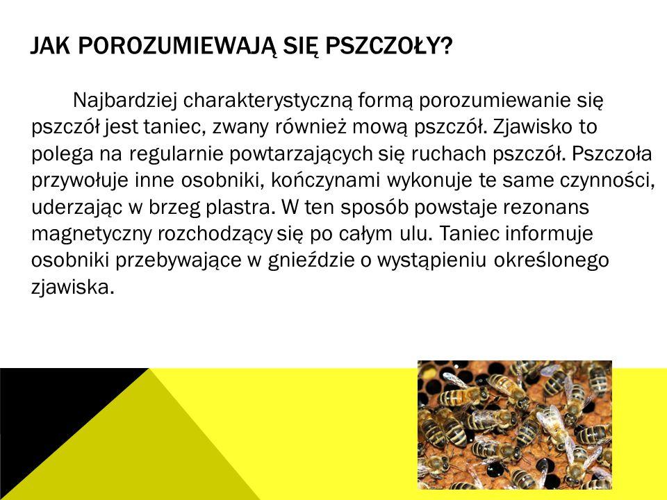 JAK POROZUMIEWAJĄ SIĘ PSZCZOŁY? Najbardziej charakterystyczną formą porozumiewanie się pszczół jest taniec, zwany również mową pszczół. Zjawisko to po