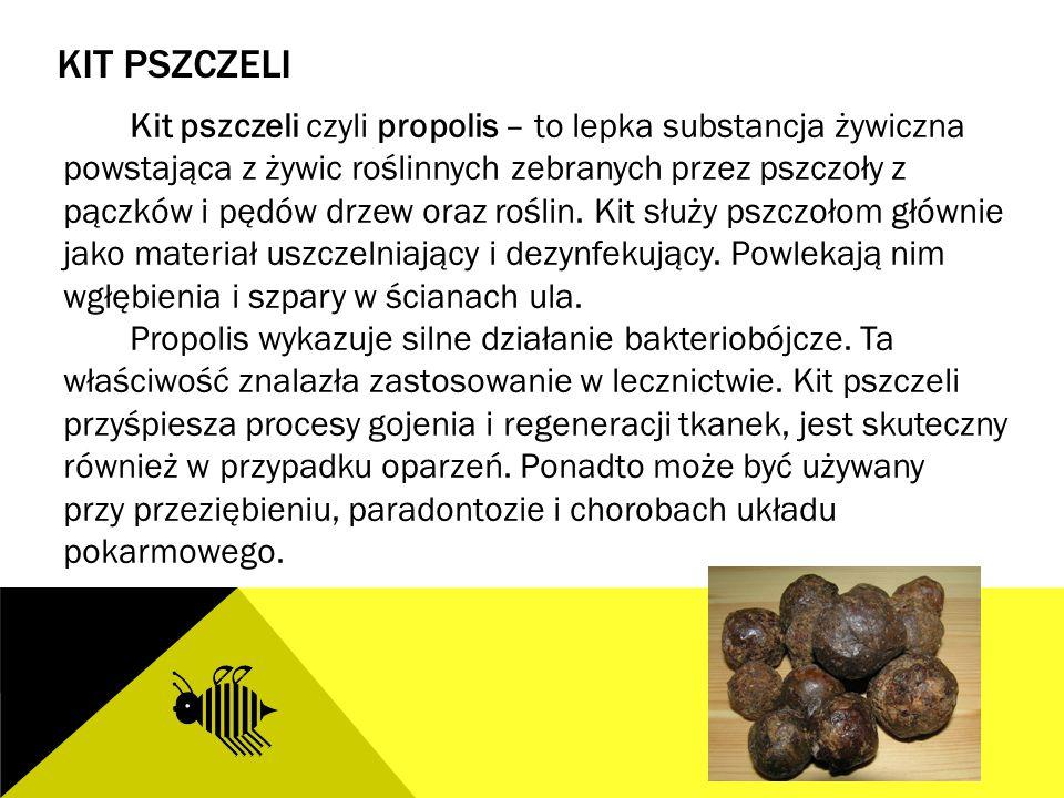 KIT PSZCZELI Kit pszczeli czyli propolis – to lepka substancja żywiczna powstająca z żywic roślinnych zebranych przez pszczoły z pączków i pędów drzew