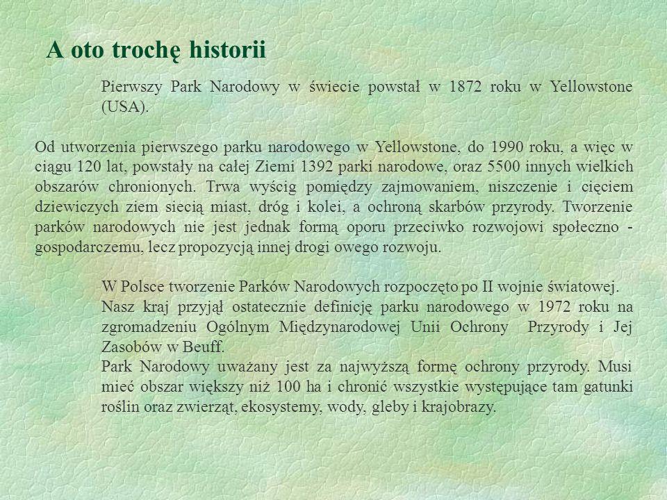 A oto trochę historii Pierwszy Park Narodowy w świecie powstał w 1872 roku w Yellowstone (USA).