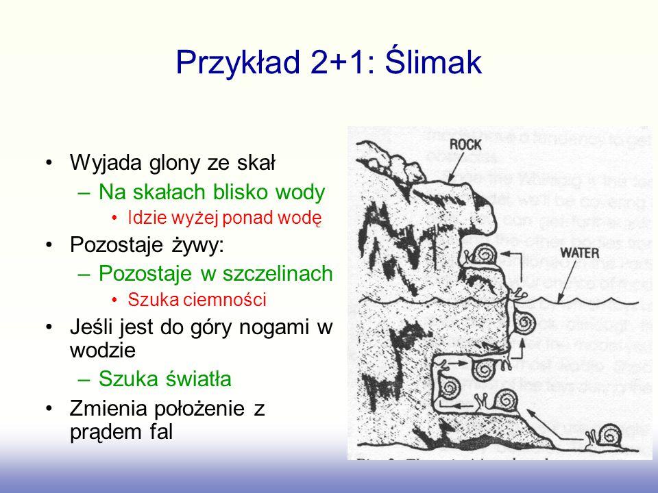 Przykład 2+1: Ślimak Wyjada glony ze skał –Na skałach blisko wody Idzie wyżej ponad wodę Pozostaje żywy: –Pozostaje w szczelinach Szuka ciemności Jeśli jest do góry nogami w wodzie –Szuka światła Zmienia położenie z prądem fal