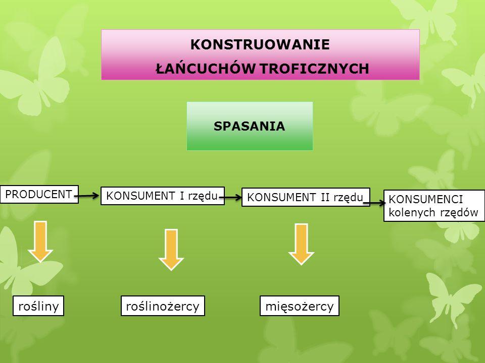 KONSTRUOWANIE ŁAŃCUCHÓW TROFICZNYCH PRODUCENT KONSUMENT I rzędu KONSUMENT II rzędu KONSUMENCI kolenych rzędów rośliny SPASANIA roślinożercymięsożercy