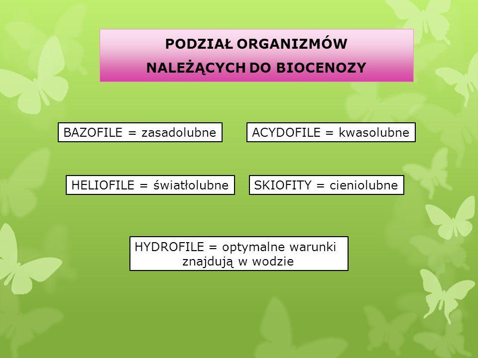 PODZIAŁ ORGANIZMÓW NALEŻĄCYCH DO BIOCENOZY BAZOFILE = zasadolubne HELIOFILE = światłolubne ACYDOFILE = kwasolubne SKIOFITY = cieniolubne HYDROFILE = o