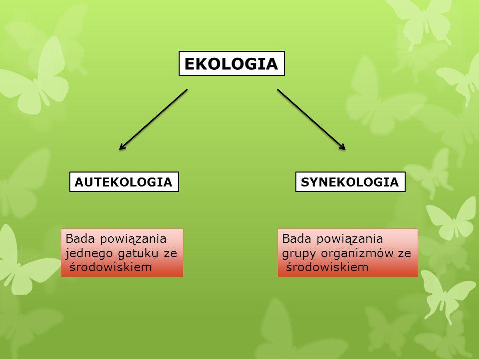 EKOLOGIA AUTEKOLOGIASYNEKOLOGIA Bada powiązania jednego gatuku ze środowiskiem Bada powiązania grupy organizmów ze środowiskiem