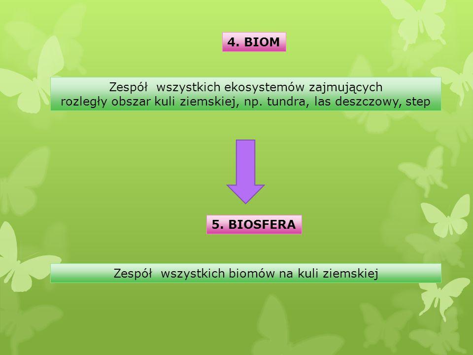 4. BIOM Zespół wszystkich ekosystemów zajmujących rozległy obszar kuli ziemskiej, np. tundra, las deszczowy, step 5. BIOSFERA Zespół wszystkich biomów