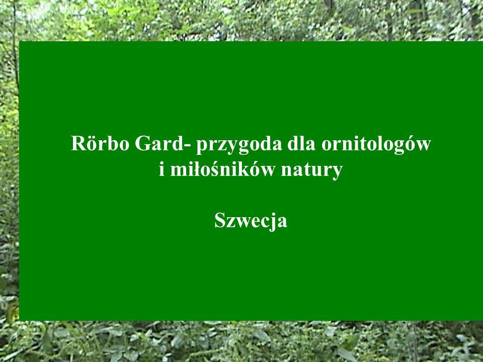 Rörbo Gard- przygoda dla ornitologów i miłośników natury Szwecja