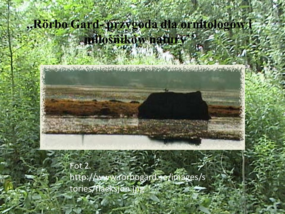 ,,Rörbo Gard- przygoda dla ornitologów i miłośników natury'' Fot 2.