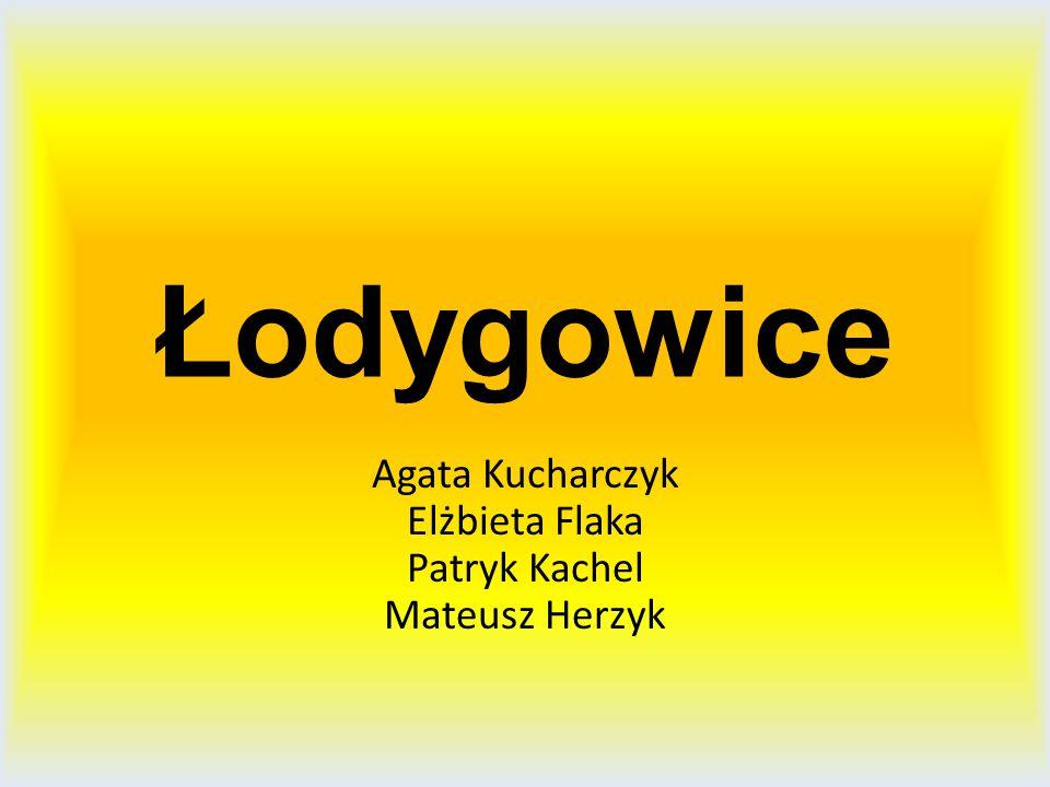 Łodygowice Agata Kucharczyk Elżbieta Flaka Patryk Kachel Mateusz Herzyk