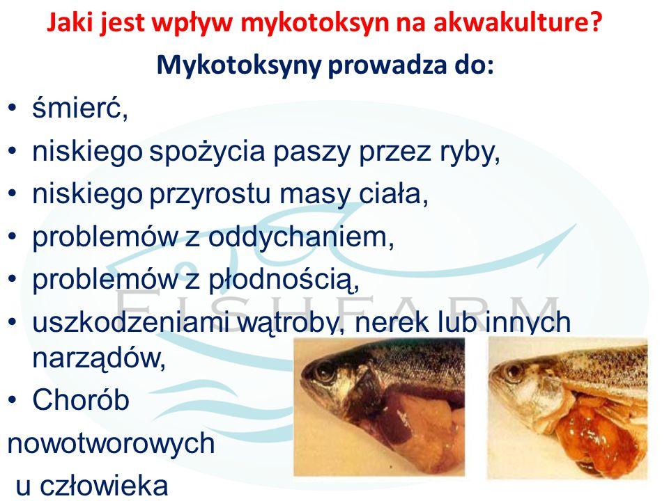 Jaki jest wpływ mykotoksyn na akwakulture? Mykotoksyny prowadza do: śmierć, niskiego spożycia paszy przez ryby, niskiego przyrostu masy ciała, problem