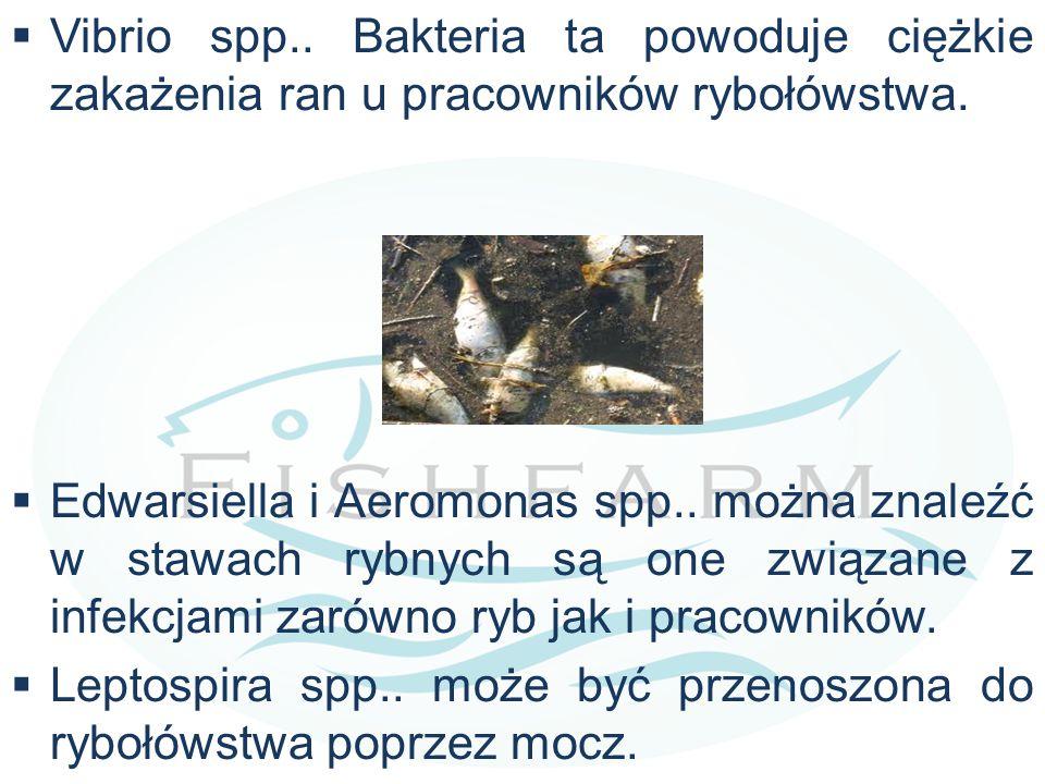  Vibrio spp.. Bakteria ta powoduje ciężkie zakażenia ran u pracowników rybołówstwa.  Edwarsiella i Aeromonas spp.. można znaleźć w stawach rybnych s