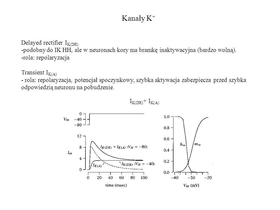 Kanały K + I K(DR) + I K(A) Delayed rectifier I K(DR) -podobny do IK HH, ale w neuronach kory ma bramkę inaktywacyjna (bardzo wolną).