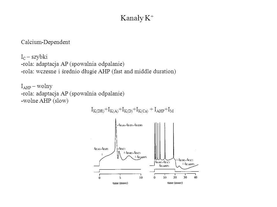 Kanały K + I K(DR) +I K(A) +I K(D) +I K(Ca) + I AHP +I M Calcium-Dependent I C – szybki -rola: adaptacja AP (spowalnia odpalanie) -rola: wczesne i średnio długie AHP (fast and middle duration) I AHP – wolny -rola: adaptacja AP (spowalnia odpalanie) -wolne AHP (slow)