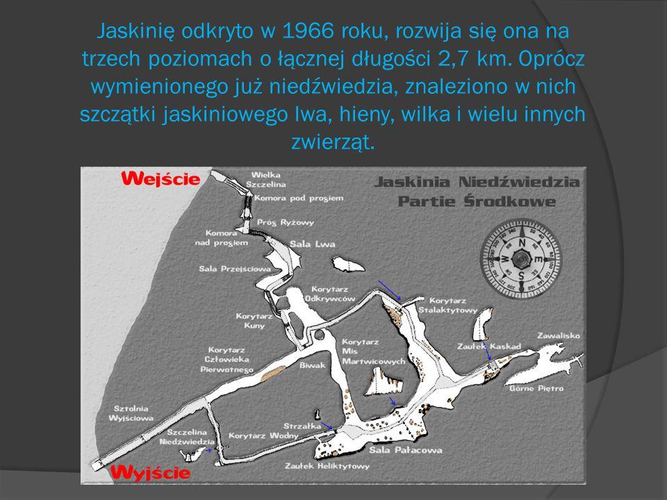 Prezentację wykonał Damian Mikołajczyk, kl. III C