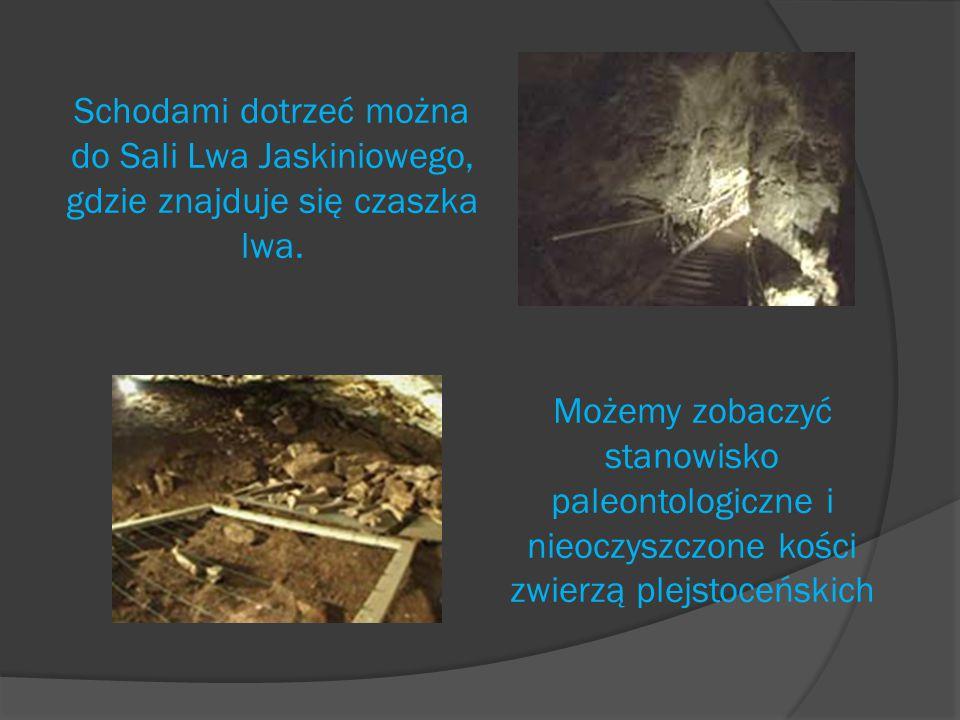 Kolejna atrakcja na naszej trasie to Sala ze szkieletem niedźwiedzia jaskiniowego.