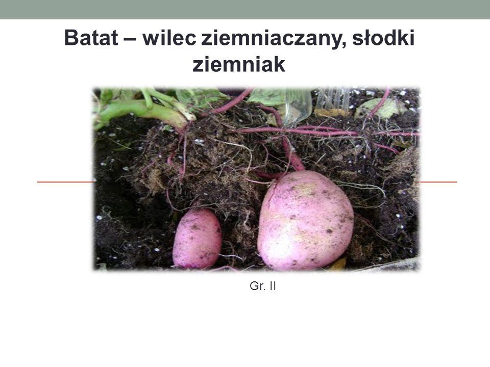 Systematyka botaniczna Rodzina – powojowate (Convolvulaceae Juss.) Rodzaj – wilec (Ipomoea L.) Gatunek - wilec ziemniaczany (Ipomoea batatas L.
