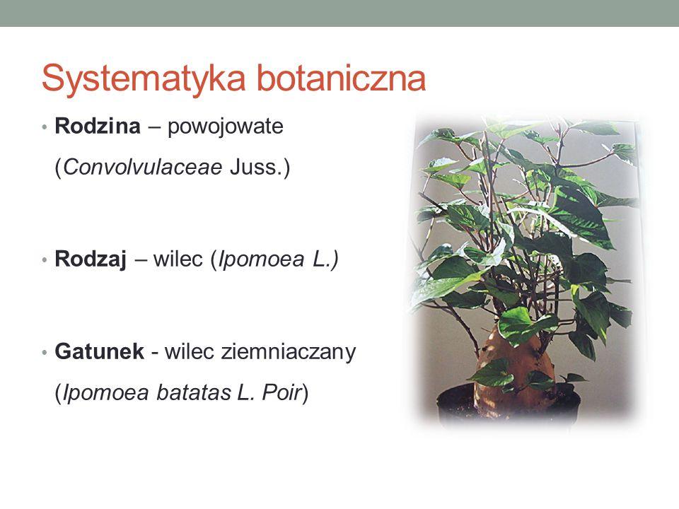 Liście batata zawierają około 12,2% suchej masy, w tym: ok.