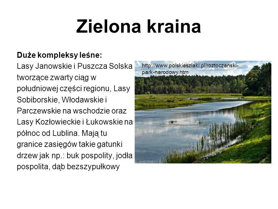 Zielona kraina Duże kompleksy leśne: Lasy Janowskie i Puszcza Solska tworzące zwarty ciąg w południowej części regionu, Lasy Sobiborskie, Włodawskie i