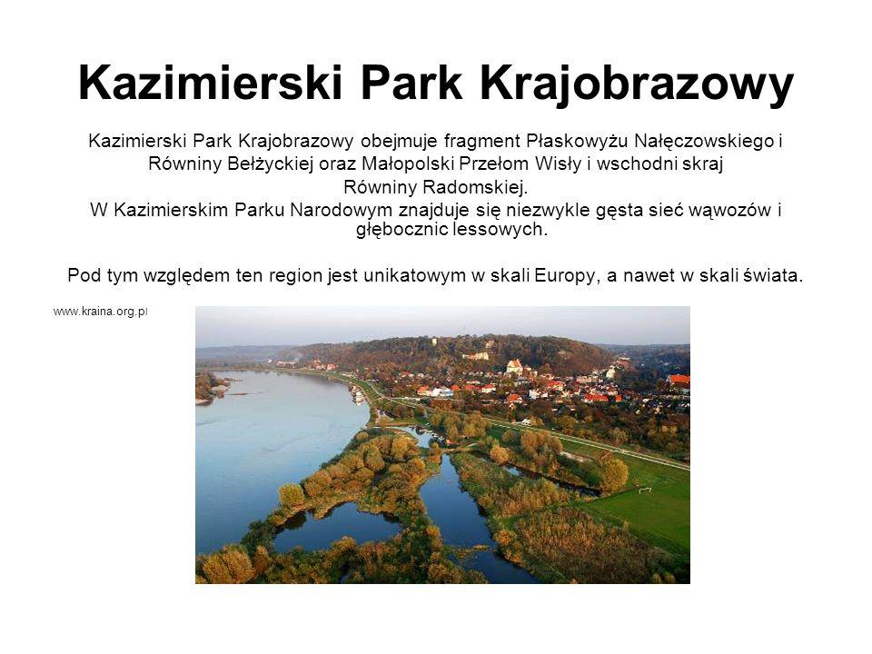 Kazimierski Park Krajobrazowy Kazimierski Park Krajobrazowy obejmuje fragment Płaskowyżu Nałęczowskiego i Równiny Bełżyckiej oraz Małopolski Przełom W