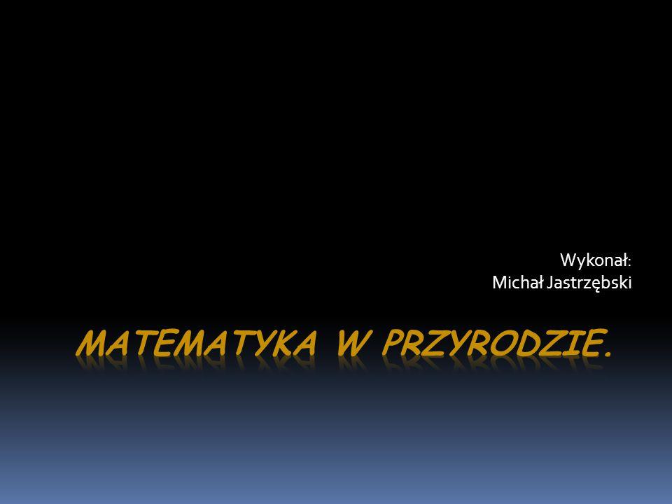 Wykonał: Michał Jastrzębski