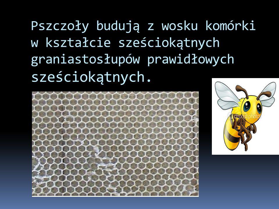 Pszczoły budują z wosku komórki w kształcie sześciokątnych graniastosłupów prawidłowych sześciokątnych. 