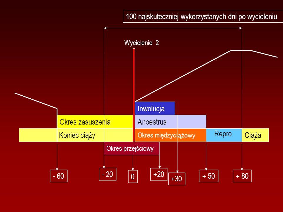 Inwolucja Okres między ciążowy Anoestrus Okres zasuszenia Koniec ciąży Ciąża 0 +30 + 50+ 80 Okres przejściowy +20 - 20 - 60 Repro Wycielenie 2 100 naj